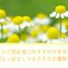 花壇に植えっぱなしでいい花(多年草)!ガーデニング初心者におすすめ!